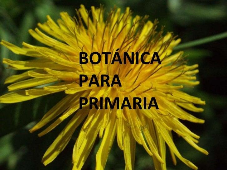 BOTÁNICA PARA PRIMARIA