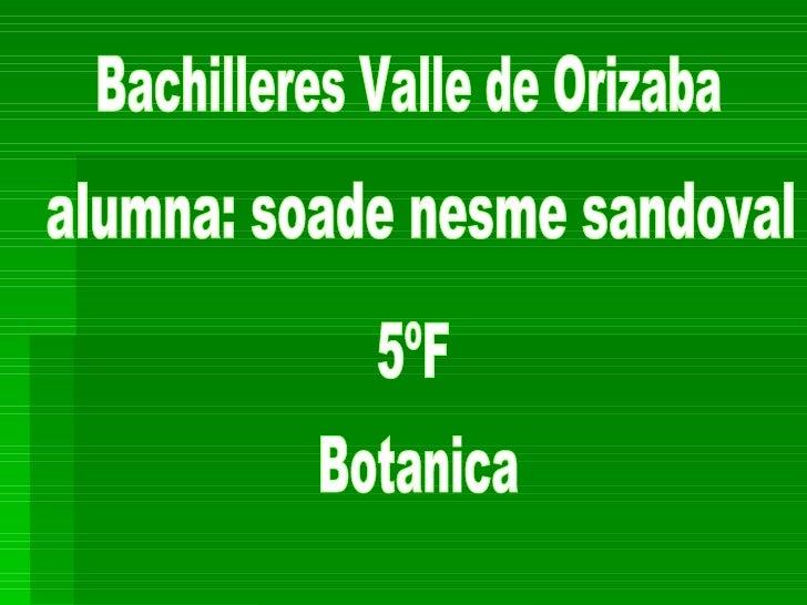 Bachilleres Valle de Orizaba alumna: soade nesme sandoval 5ºF Botanica