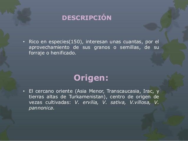 Morfología Anuales o perennes, herbáceas Tallos: flexibles, trepadores mediante zarcillos Hojas: compuestas, parinpinna...