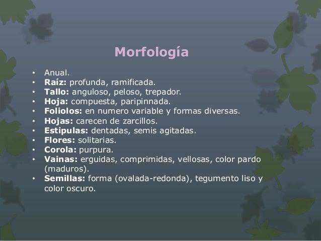 Morfología Anual. Sistema radicular desarrollado. Tallo: poca altura, escasamente ramificado, crecimiento lento. Hoja:...