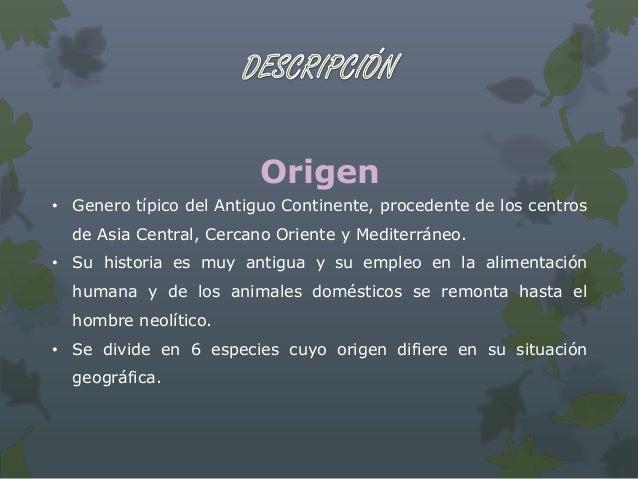 Origen• Originaria de América central y sur de México, como del  sudamericano.• En Europa fue introducida poco después del...