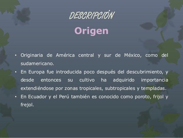 Botánica:• Planta: herbáceas, anuales, mas o menos volubles.• Hojas: trifoliadas con foliolos oval – romboidales.• Inflore...