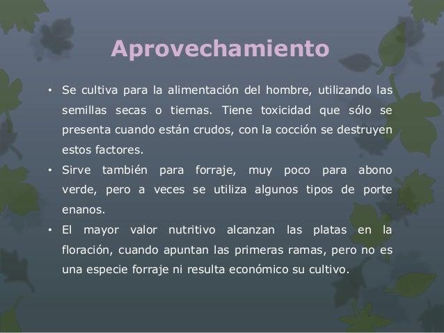 Aprovechamiento     (García M. y Madriz P)     • Las semillas de este cultivo poseen buenos contenidos         tanto de pr...