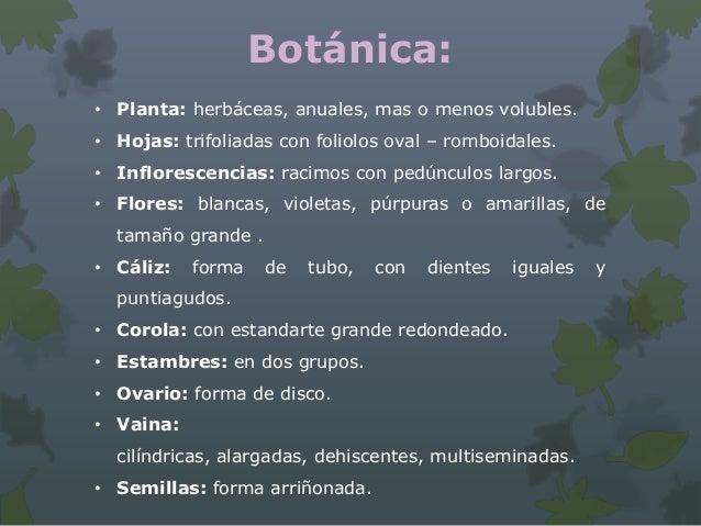 Botanica trabajo