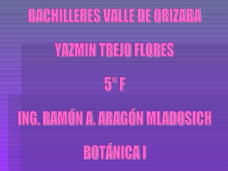 BACHILLERES VALLE DE ORIZABA YAZMIN TREJO FLORES 5° F ING. RAMÓN A. ARAGÓN MLADOSICH BOTÁNICA I