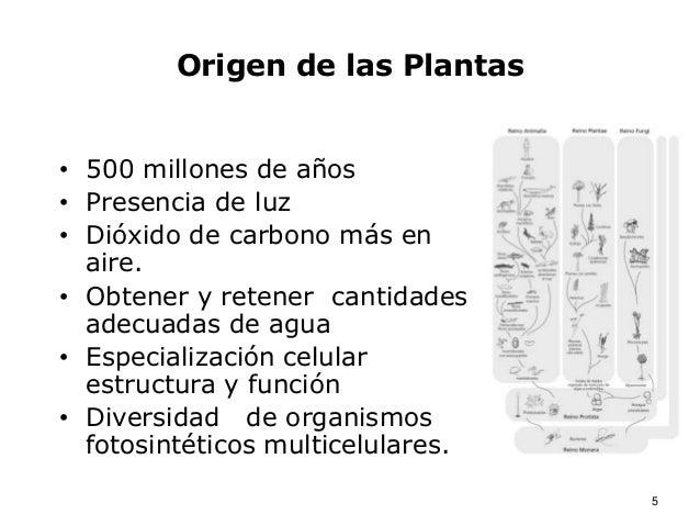Bot nica y origen de las plantas for Origen de las plantas ornamentales