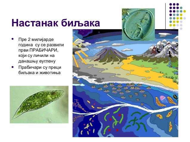 Настанак биљака  Пре 2 милијарде година су се развили први ПРАБИЧАРИ, који су личили на данашњу еуглену  Прабичари су пр...