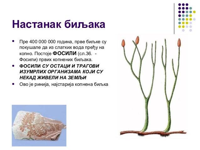Настанак биљака  Пре 400 000 000 година, прве биљке су покушале да из слатких вода пређу на копно. Постоје ФОСИЛИ (сл.36....