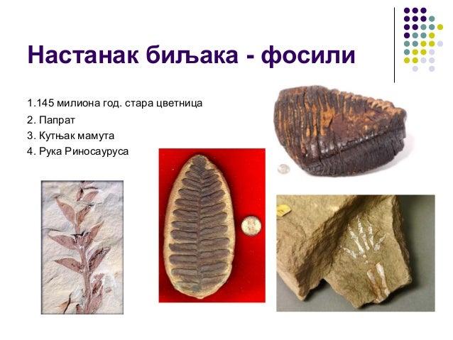 Настанак биљака - фосили 1.145 милиона год. стара цветница 2. Папрат 3. Кутњак мамута 4. Рука Риносауруса