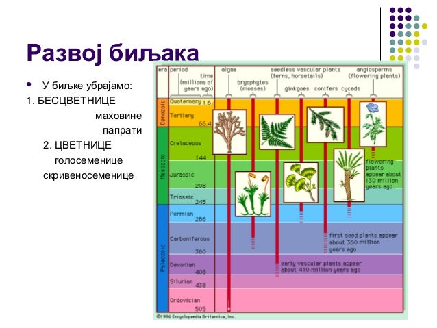 Развој биљака  У биљке убрајамо: 1. БЕСЦВЕТНИЦЕ маховине папрати 2. ЦВЕТНИЦЕ голосеменице скривеносеменице