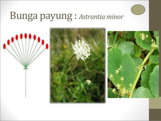 Botani Uas Pertemuan Ke 1 Bunga