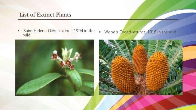 Plant Evolution, Extinction and Hybridization