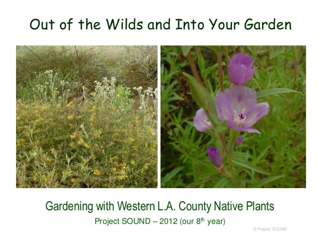 Out of the Wilds and Into Your Garden  Gardening with Western L.A. County Native Plants Project SOUND – 2012 (our 8th year...
