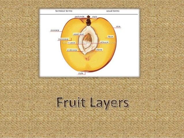 Botany fruits Slide 3