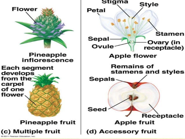 botany-fruits-8-638.jpg