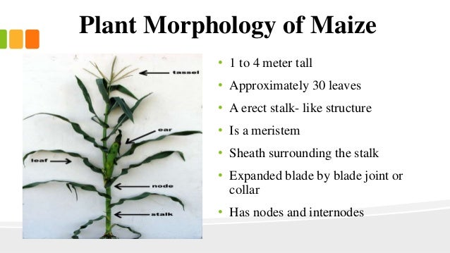 morphology is a description of a Garo morphology: a descriptive analysis this thesis is an attempt at  a morphological description of the garo language it is a descriptive analysis.