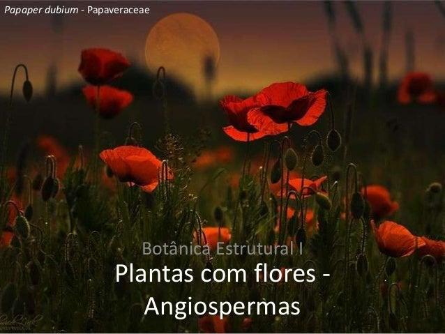 Plantas com flores -AngiospermasBotânica Estrutural IPapaper dubium - Papaveraceae