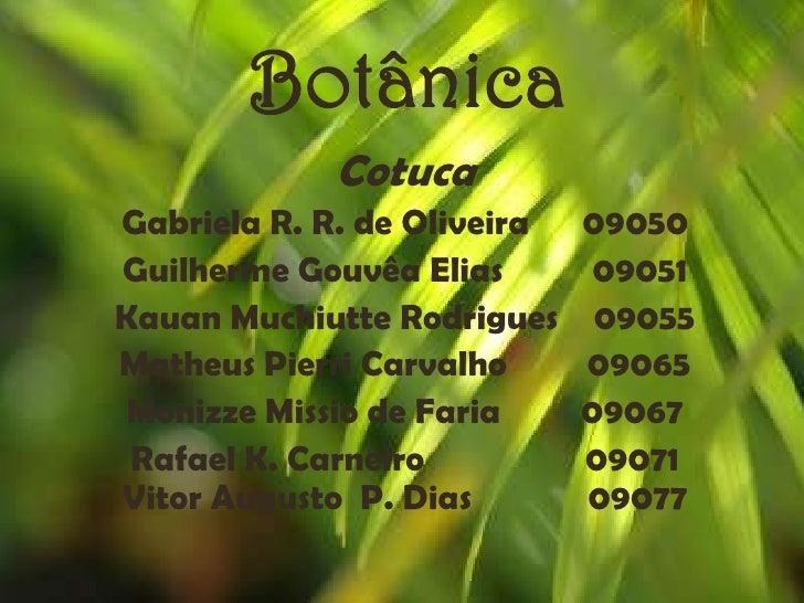 Botânica             Cotuca Gabriela R. R. de Oliveira   09050 Guilherme Gouvêa Elias        09051 Kauan Muchiutte Rodrigu...