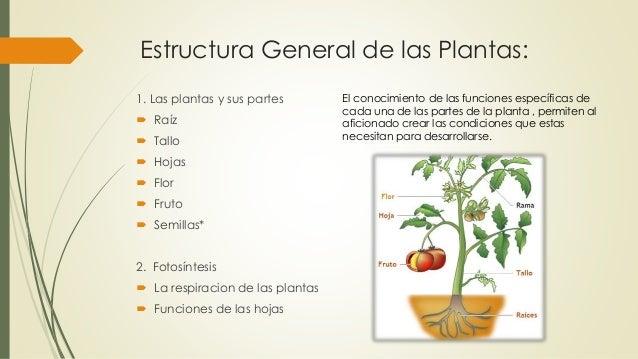 Bot nica partes de la planta for Estructuras para viveros plantas