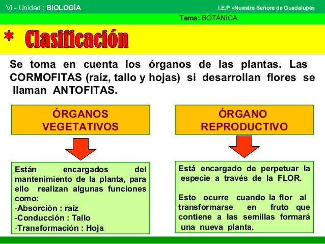 VI - Unidad : BIOLOGÍA Tema: BOTÁNICA I.E.P «Nuestra Señora de Guadalupe» Se toma en cuenta los órganos de las plantas. La...