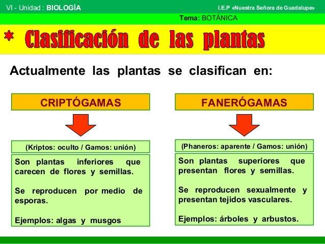 VI - Unidad : BIOLOGÍA Tema: BOTÁNICA I.E.P «Nuestra Señora de Guadalupe» Actualmente las plantas se clasifican en: CRIPTÓ...