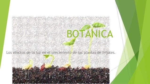 BOTÁNICA Los efectos de la luz en el crecimiento de las plantas de frijoles.