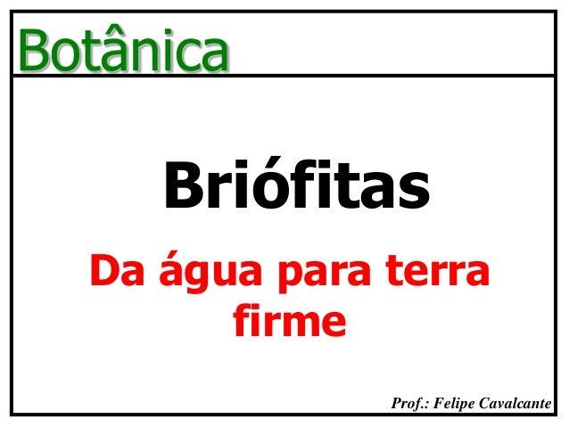 Prof.: Felipe Cavalcante Botânica Briófitas Da água para terra firme