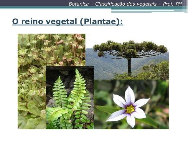 Botânica – Classificação dos vegetais – Prof. PH  O reino vegetal (Plantae):