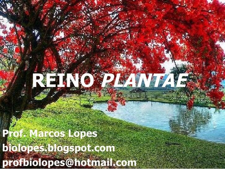 REINO PLANTAEProf. Marcos Lopesbiolopes.blogspot.comprofbiolopes@hotmail.com