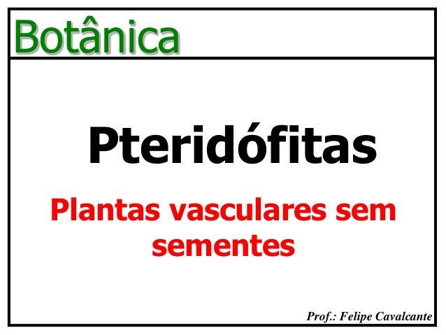 Prof.: Felipe Cavalcante Botânica Pteridófitas Plantas vasculares sem sementes