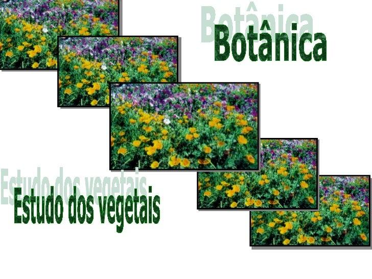 1) Representantes:a) Vegetais inferiores ou talófitas   •   Algasa) Vegetais intermediários   •   Briófitas e Pteridófitas...