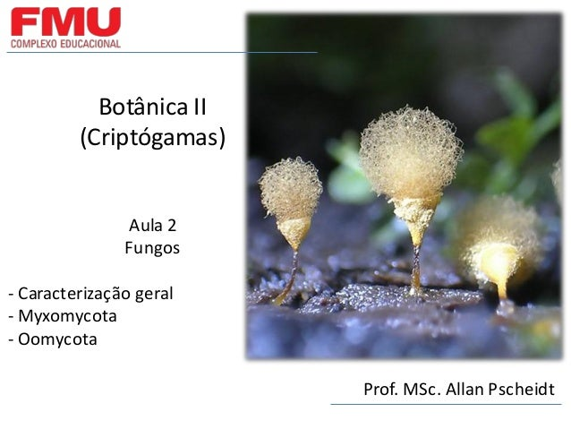 Botânica II (Criptógamas) Aula 2 Fungos - Caracterização geral - Myxomycota - Oomycota Prof. MSc. Allan Pscheidt