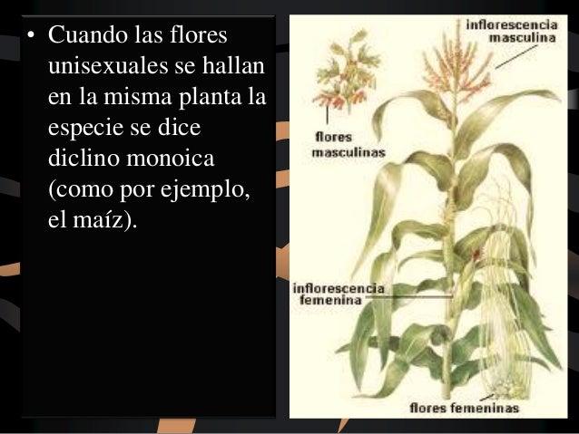 Botanica General La Flor