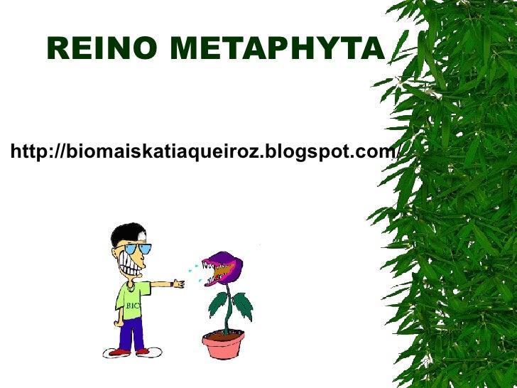 REINO METAPHYTA http://biomaiskatiaqueiroz.blogspot.com /