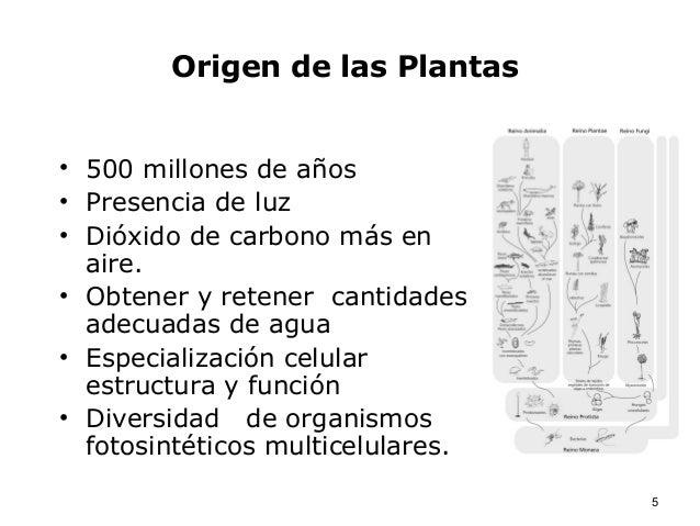 Bot nica y origen de las plantas for Cual es el significado de arquitectura