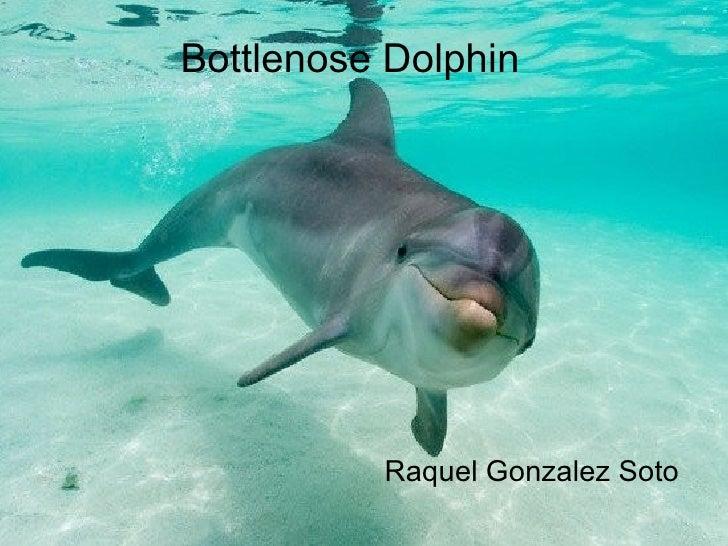 Bottlenose Dolphin          Raquel Gonzalez Soto