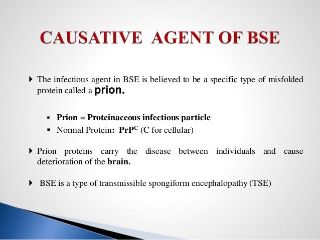 An overview of bovine spongiform encephalopathy bse