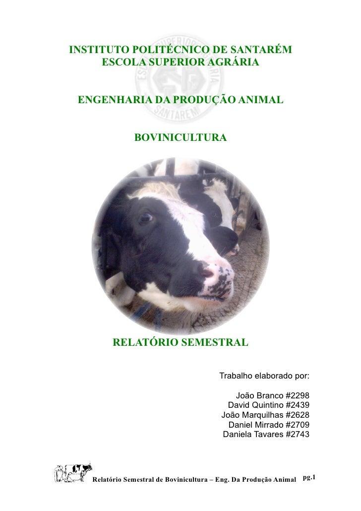 INSTITUTO POLITÉCNICO DE SANTARÉM      ESCOLA SUPERIOR AGRÁRIA    ENGENHARIA DA PRODUÇÃO ANIMAL                  BOVINICUL...