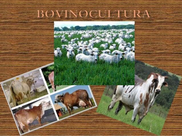  Carne (Bovinocultura de Corte)   Consumo básico   Culinária exótica   Leite (Bovinocultura de Leite)   Produção de l...