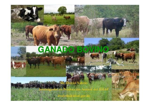 Derriengue en bovinos
