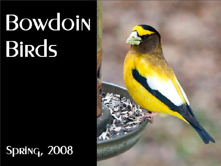 Bowdoin Birds  Spring, 2008