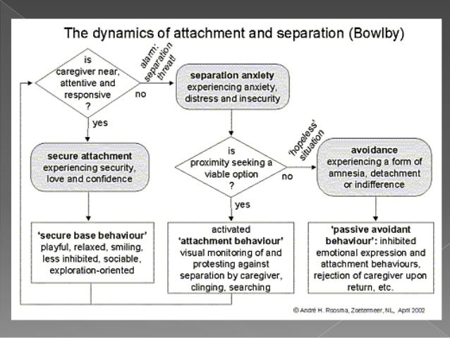 an analysis of bowlbys theory of development In summary, attachment theory was developed by bowlby and elaborated by ainsworth and is based on ethological, evolutionary, and psychoanalytical theories and research these researchers indicated that attachments unfold through an interaction of biological and environmental forces during a sensitive period early in life, within the first three years.