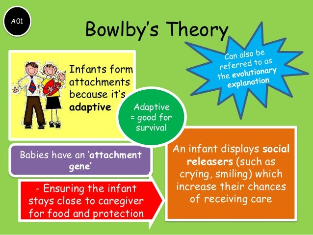 paper on attachment a study on bowlbys attachment theory psychology essay