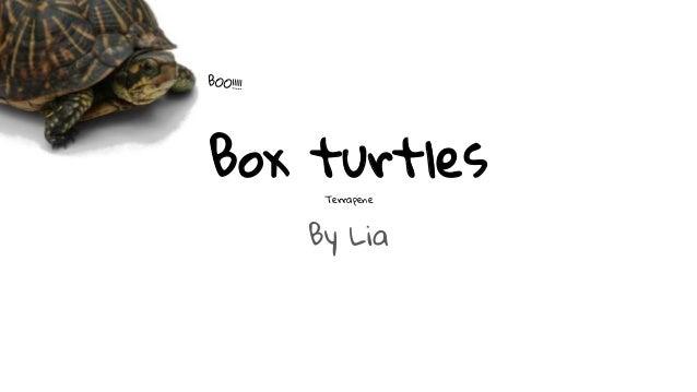 Box turtles Terrapene By Lia