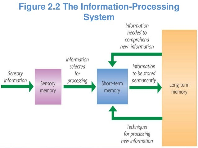 memory models theories altruism Step 2: memory storage key points the capacity of long-term memory storage is much greater than that of short-term memory in theory, long-term memory can hold an infinite amount of a memory model must identify how an encoded memory can reside in memory storage for a prolonged.