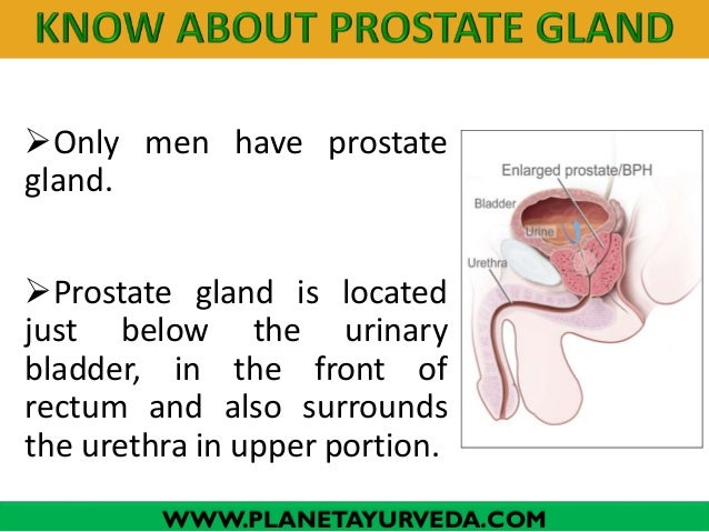 Only men have prostate gland.  Prostate gland is located just below the urinary bladder, in the front of rectum and also...