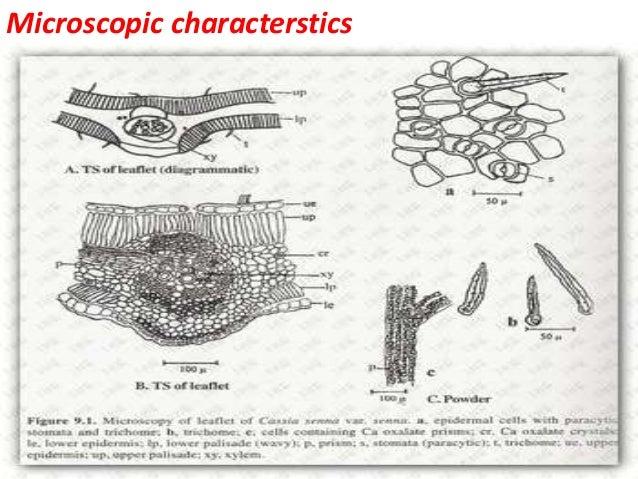 Microscopic characterstics