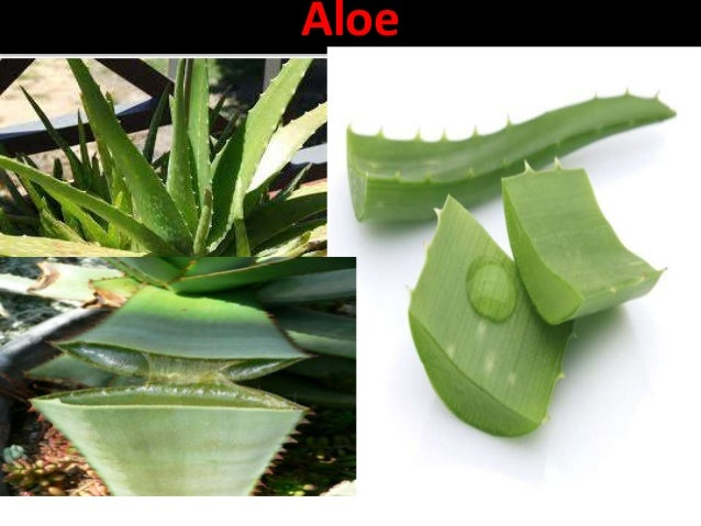 Aloes Synonym Aloe, Hindi-musabbar, kumari. Marathi- korphad BS It is dried juice of leaves of Aloe Barbadensis miller kno...