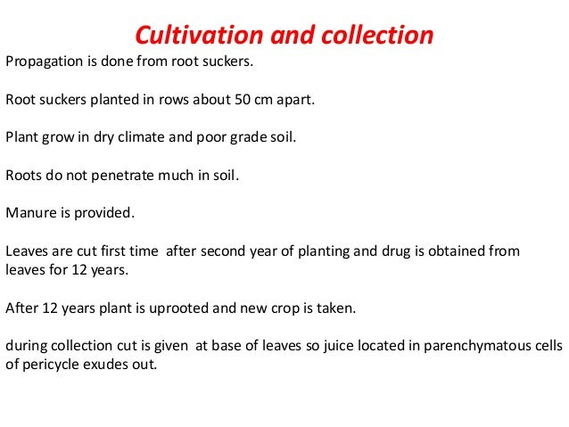 Preparation of aloe 1 barbados or curacao aloes it is obtained by giving cut on leaves of aloe barbadensis. because of spi...