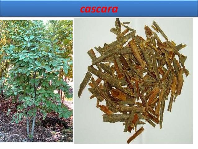 Cascara synonym cascara sagrada, sacred bark, chittem bark BS it is dried bark of Rhamnus Purshiana de candolle, family Rh...